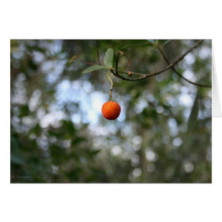 Fruit of the tree of madroño in the mountain range card