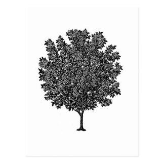 Fruit Tree Postcard