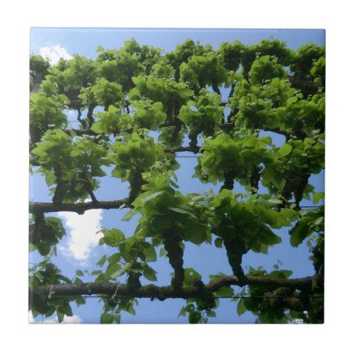 Fruit Trees at Erddig Hall Tiles