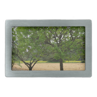 Fruit trees with green leaves in spring belt buckles