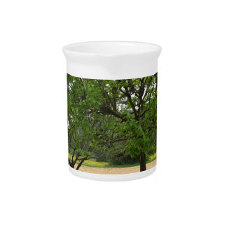 Fruit trees with green leaves in spring pitcher
