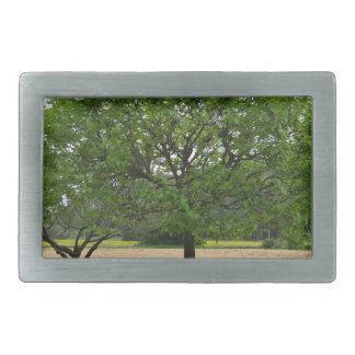 Fruit trees with green leaves in spring rectangular belt buckles