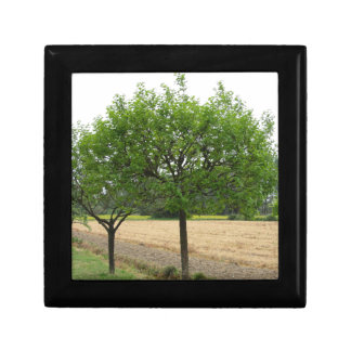 Fruit trees with green leaves in spring small square gift box