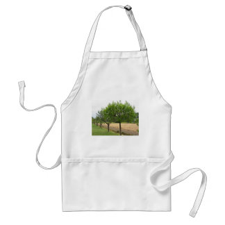 Fruit trees with green leaves in spring standard apron