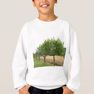 Fruit trees with green leaves in spring sweatshirt