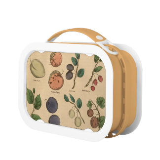 Fruits and leaves lunchboxes