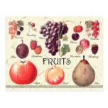 Fruits Illustration
