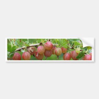 Fruits of a gooseberry bumper sticker