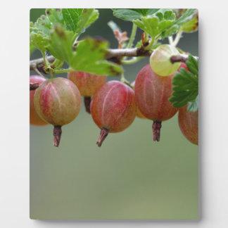Fruits of a gooseberry plaque