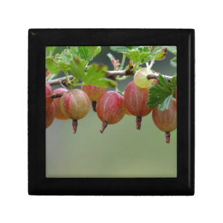 Fruits of a gooseberry small square gift box