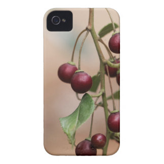 Fruits of a shiny leaf buckthorn Case-Mate iPhone 4 case