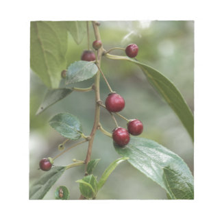 Fruits of a shiny leaf buckthorn notepad
