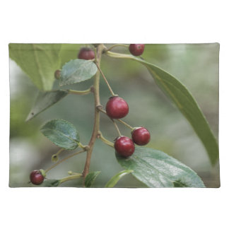 Fruits of a shiny leaf buckthorn placemat