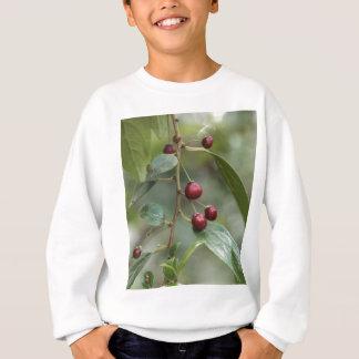 Fruits of a shiny leaf buckthorn sweatshirt