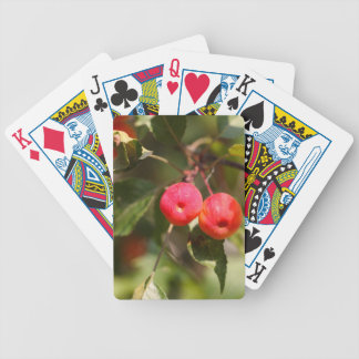 Fruits of a wild apple tree bicycle playing cards