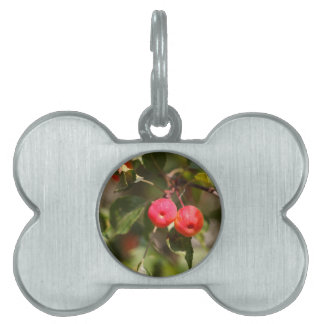 Fruits of a wild apple tree pet ID tag