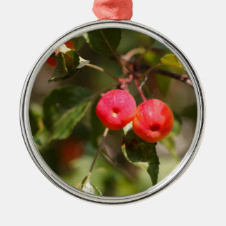 Fruits of a wild apple tree Silver-Colored round decoration