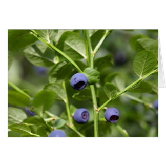 Fruits of the European blueberry Card