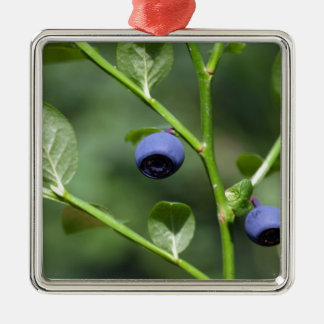Fruits of the European blueberry Metal Ornament