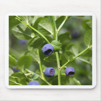 Fruits of the European blueberry Mouse Pad