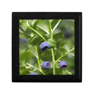 Fruits of the European blueberry Small Square Gift Box