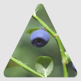 Fruits of the European blueberry Triangle Sticker