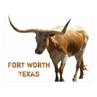 Ft Worth Longhorn Postcard