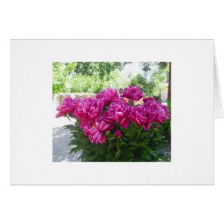 Fuchsia Peony Card