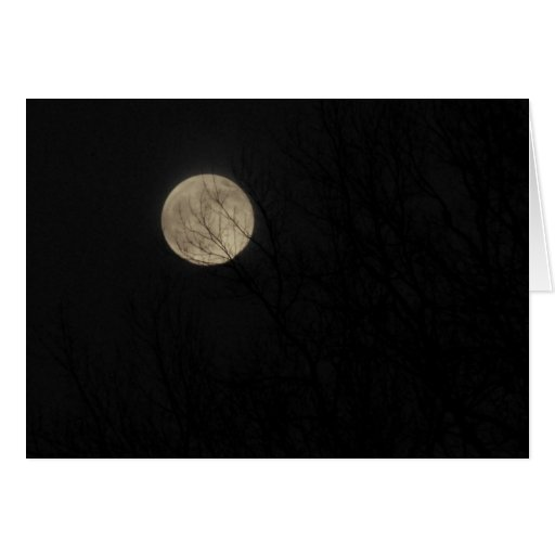 Full Moon, Bare Limbs,  Winter Solstice Card