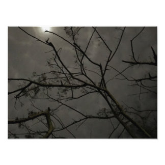 Full Moon Over Tree Photo Print