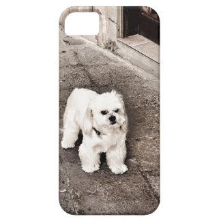 fullsizeoutput_c75 Crabby Dog iPhone 5 Case
