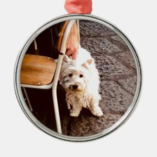 FullSizeRender 18Shy Dog Metal Ornament