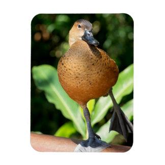 Fulvous Whistling Duck On Rail Rectangular Photo Magnet