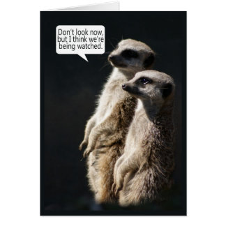 Fun Birthday Card With Meerkats - Humour