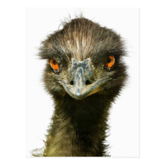 Fun Glaring Emu Close Up Postcard