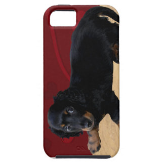 Fun iCuddle Long Hair Dachsund iPhone 5 Covers
