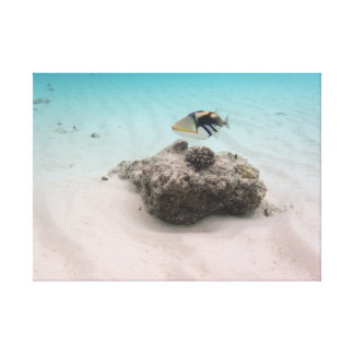 Fun Maldives Snorkeling Adventures Coral Fish Canvas Print