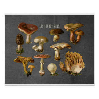 Fungi Art, Botanical Mushroom Print, Kitchen Decor