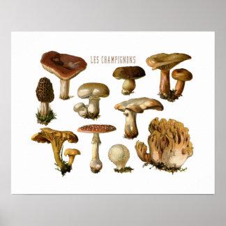Fungi Art, Botanical Mushroom Print, Kitchen Decor Poster