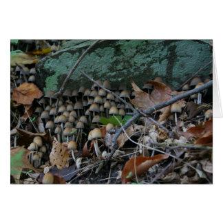 Fungi card