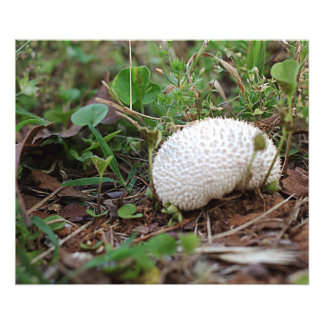 Fungi in the grass photo print