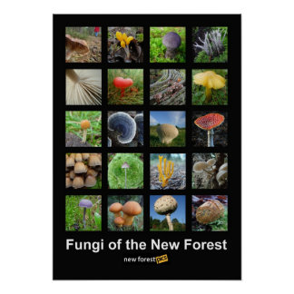 Fungi of the New Forest poster
