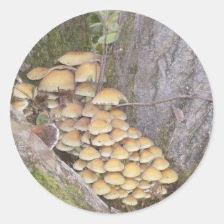 Fungi on tree classic round sticker