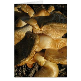 Fungus Mushrooms Toadstools Card