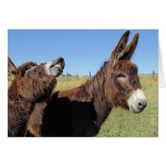 Funky Donkeys Card