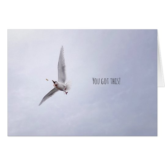 "Funny Animal Motivational ""You Got This"" Seagull Card"