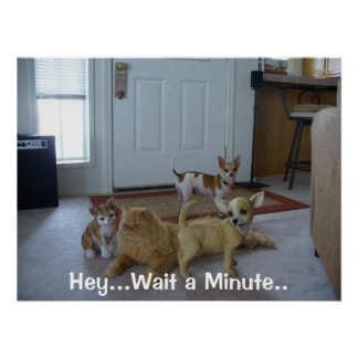 Funny Animal Picture - Cute Chihauhau Poster