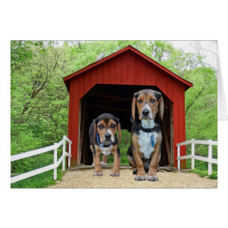 Funny Beagle Pups At The Red Covered Bridge Card