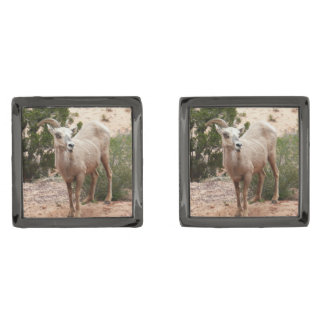 Funny Bighorn Sheep at Zion National Park Gunmetal Finish Cufflinks