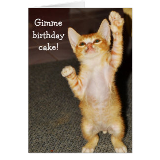 Funny Birthday Card: Kitten stands up Greeting Card